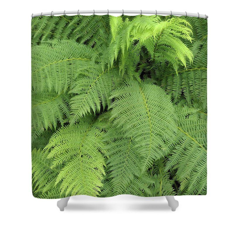 Soft Ferns Shower Curtain By Sverre Andreas Fekjan This Is Made From 100 Polyester Fabric And Includes 12 Holes At The Top Of