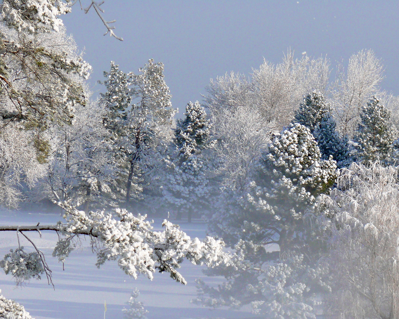 winter scene in denver just for fun pinterest winter scenes