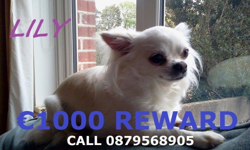 1000 Euro reward given for Lily's safe returnNo questions