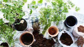 Rempoter ses plantes vertes ikea