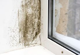 How To Get Rid Of Mould And Mildew On Walls Musty Smell In House