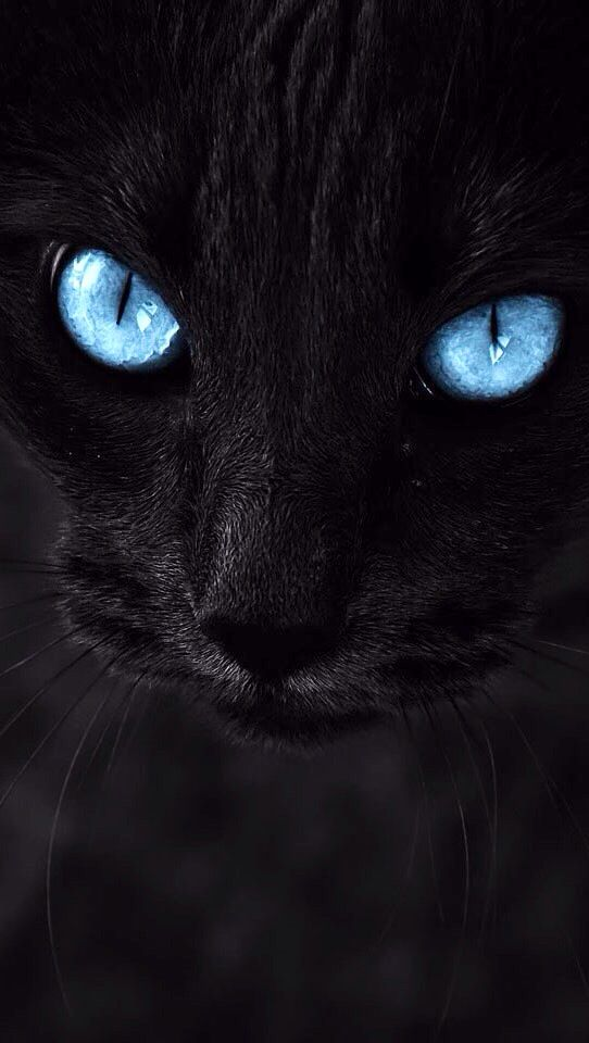Black Cat S Face With Blue Eyes Blue Eyes Aesthetic Cat With Blue Eyes Purple Wallpaper Phone
