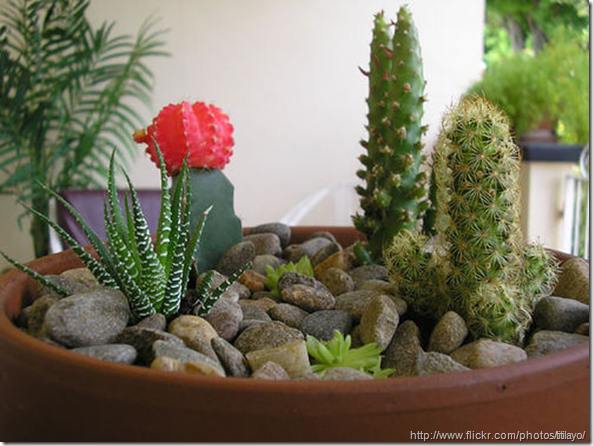 Attractive Small+Container+Cactus+Garden+Design | Types Of Containers For Dish Gardens