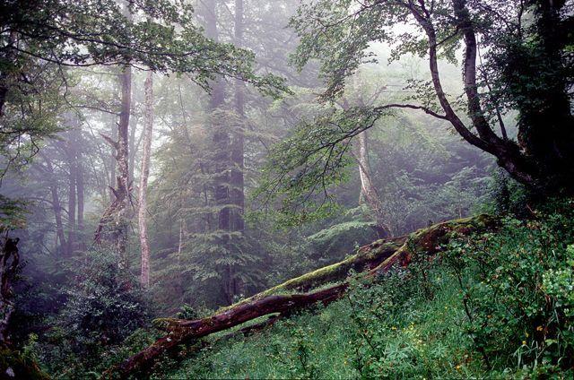 Lugar precioso con ambiente de niebla, rasgo característico del bosque húmedo.
