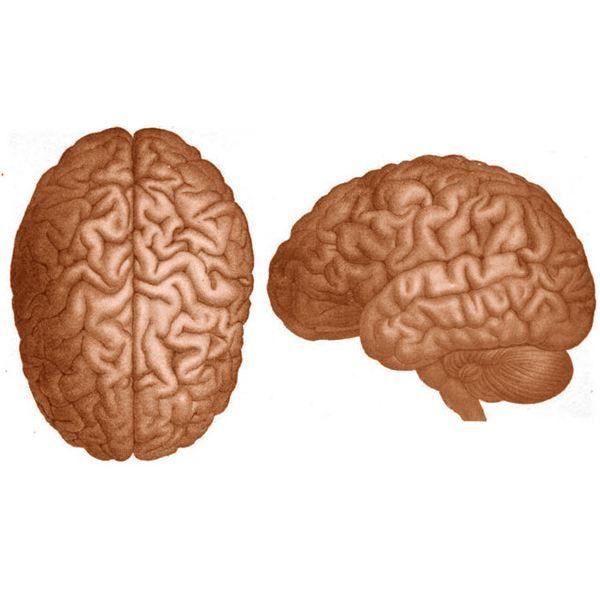 Lesson Plan Basic Brain Anatomy Neurosciencepsychology