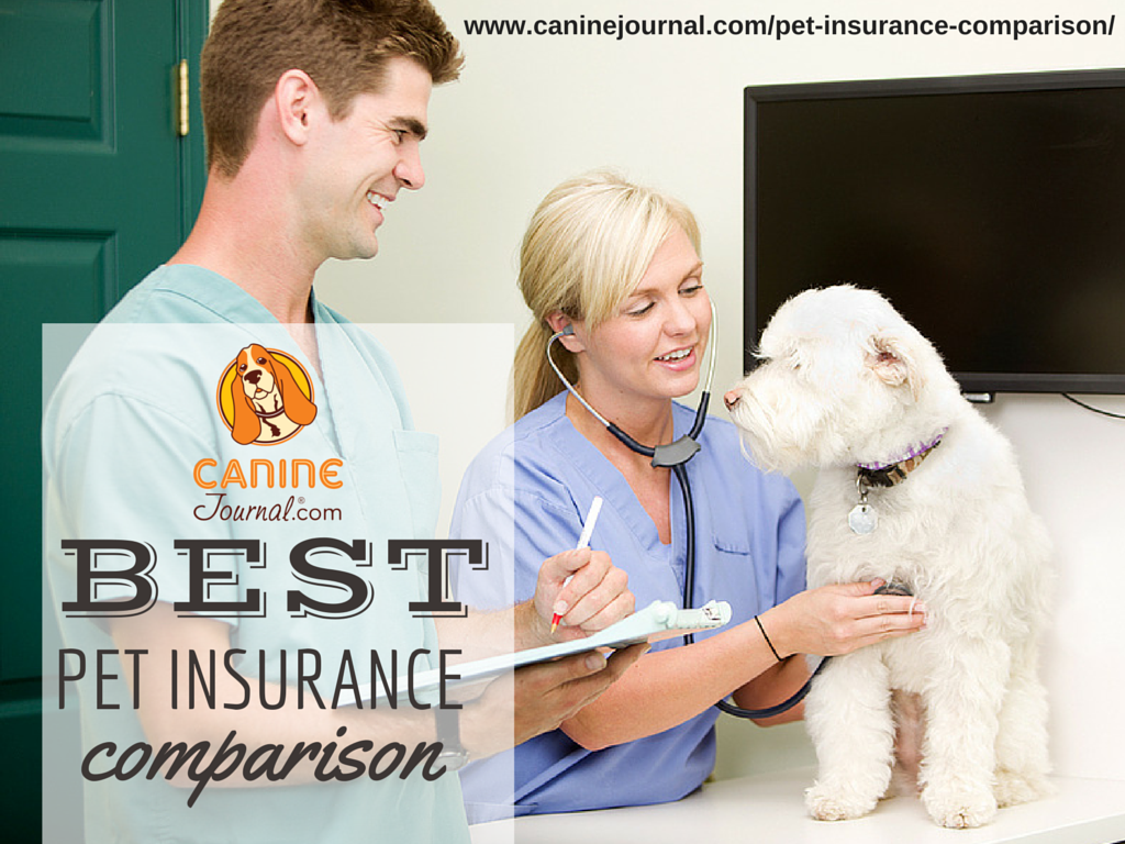 What's The Best Pet Insurance Company For 2020 Best pet