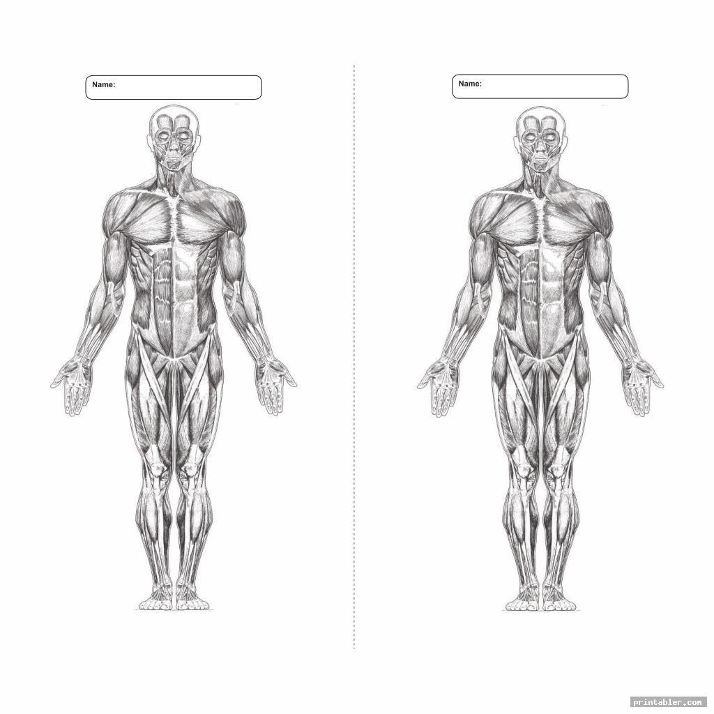 Blank Printable Worksheets Muscle Anatomy