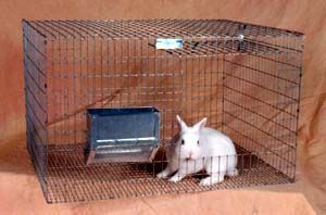 a place to order cages   Rabbit cage, Meat rabbits ...