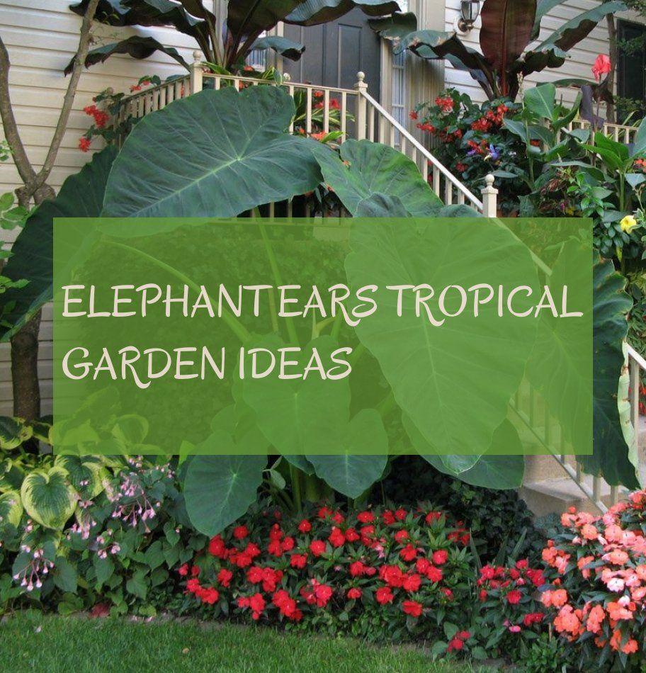 Elephant Ears tropical garden ideas ; tropische gartenideen der elefantenohren #Elephant #Ears #tropical #garden #ideas ; idées jardin tropical oreilles d'éléphant #elephantearsandtropicals