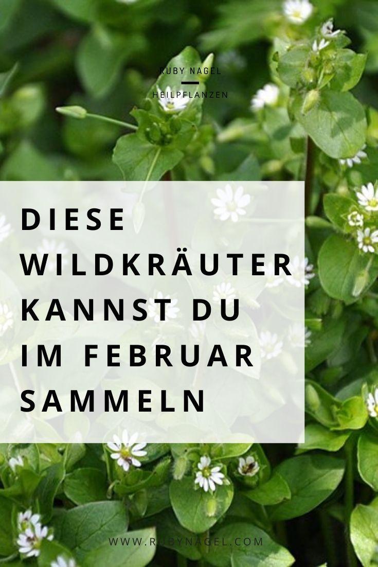 Essbare Wildpflanzen Und Krauter Sammeln Im Februar Ruby Nagel In 2020 Pflanzen Essbare Pflanzen Heilpflanzen
