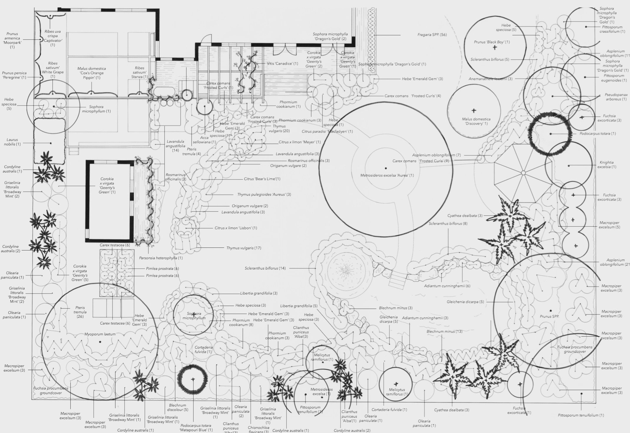 sustainable garden new zealand hand drawn planting plan by