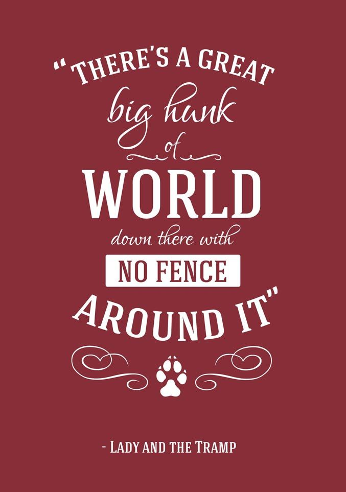 Disney Quotes Glamorous Disney Quotes To Travel Pinterest  Fences Disney Quotes And Big