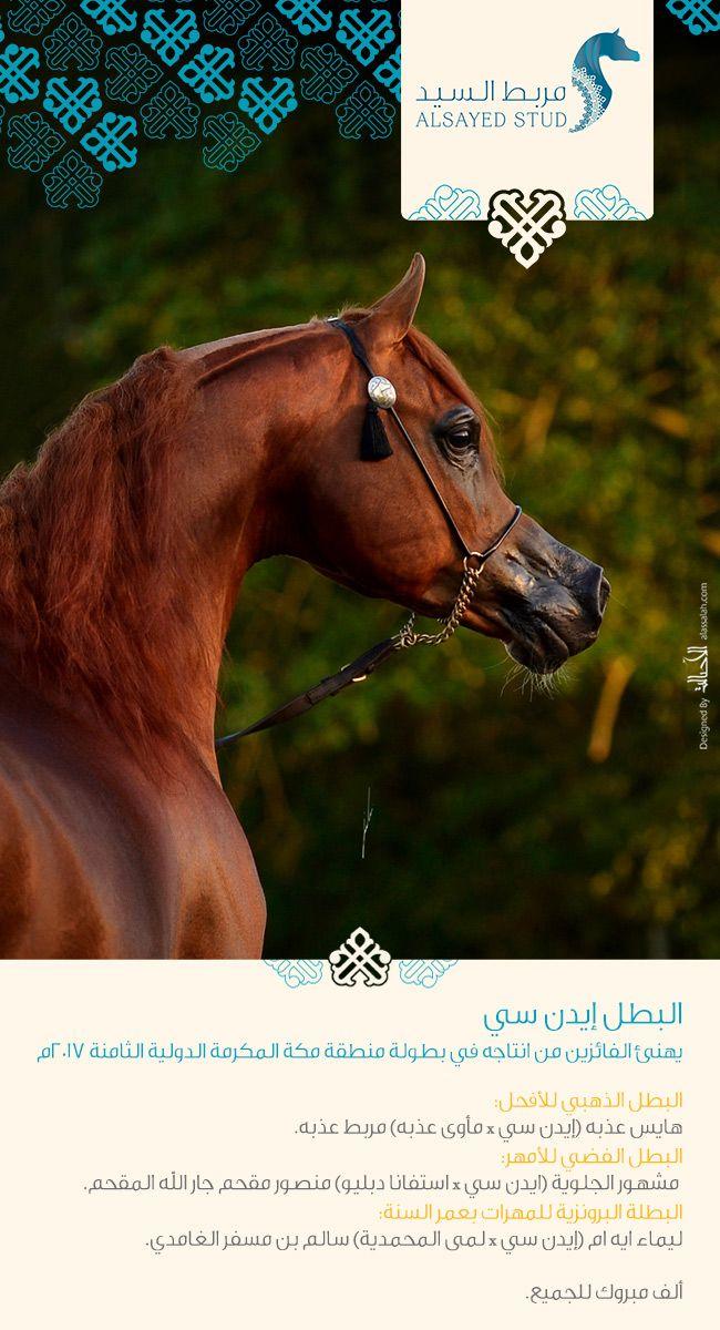 البطل إيدن سي يهنئ الفائزين من إنتاجهفي بطولة منطقة مكة المكرمة الدولية الثامنة Arabische Pferde Pferde