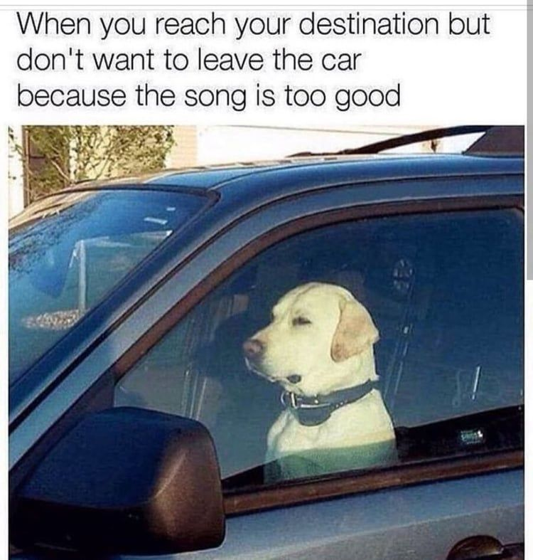 Small Dog Memes Humor Funny Do You Love Dogs Well You Will Surely Enjoy These Super Hilarious Lates Funny Dog Memes Funny Relatable Memes Really Funny Memes