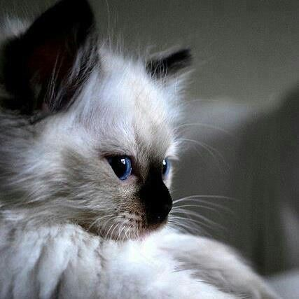 Gorgeous! http://sulia.com/channel/cats/f/bb0feaf8-f081-4cdf-bcc2-9e5600691541/?