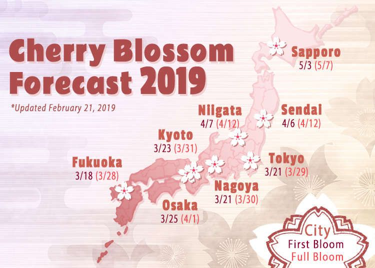 Japan Cherry Blossom 2021 Forecast When Where To See Sakura In Japan Live Japan Travel Guide Japan Cherry Blossom Season Japan Travel Japanese Travel