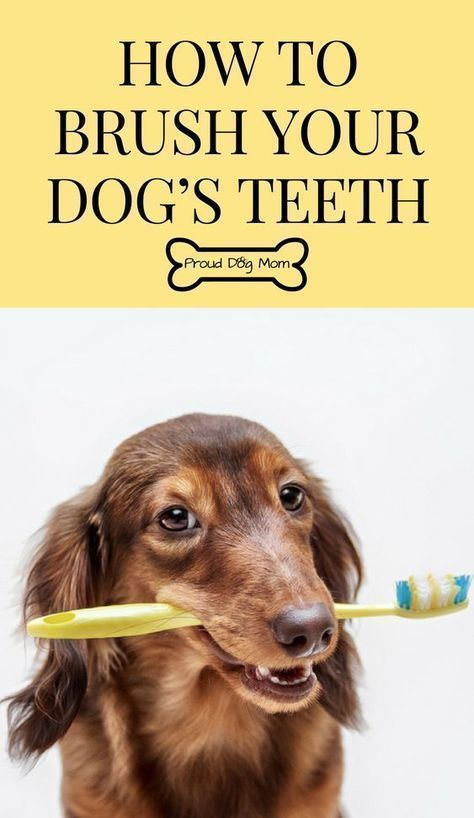 How To Brush Your Dog S Teeth Dog Health Dog Care Tips Via