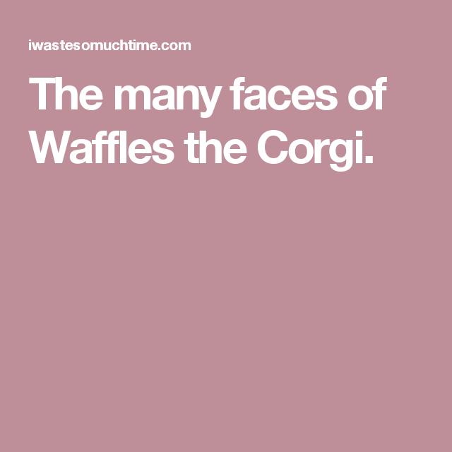 The many faces of Waffles the Corgi.
