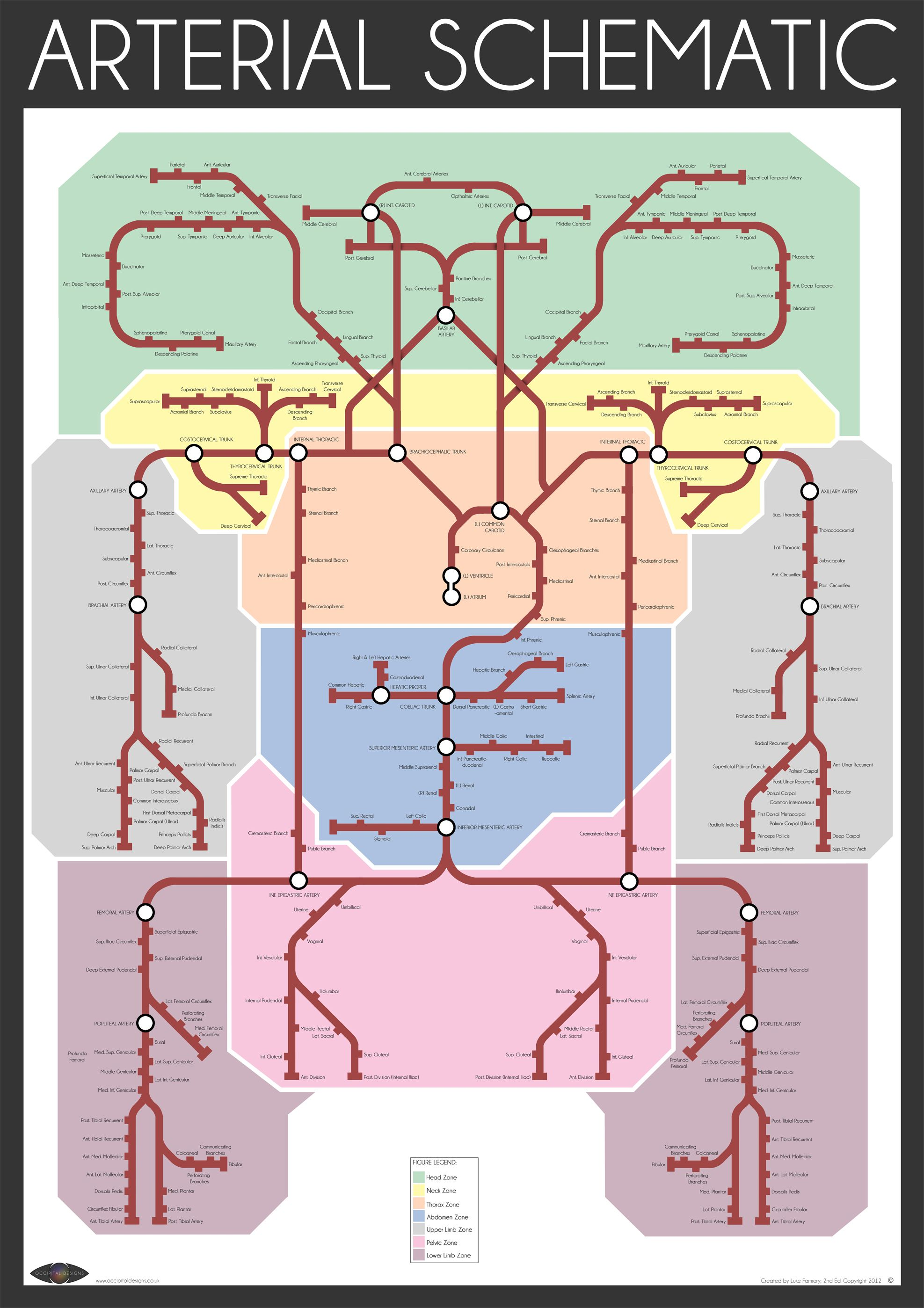 The Arterial Schematic Represents The Intricate Three Dimensional
