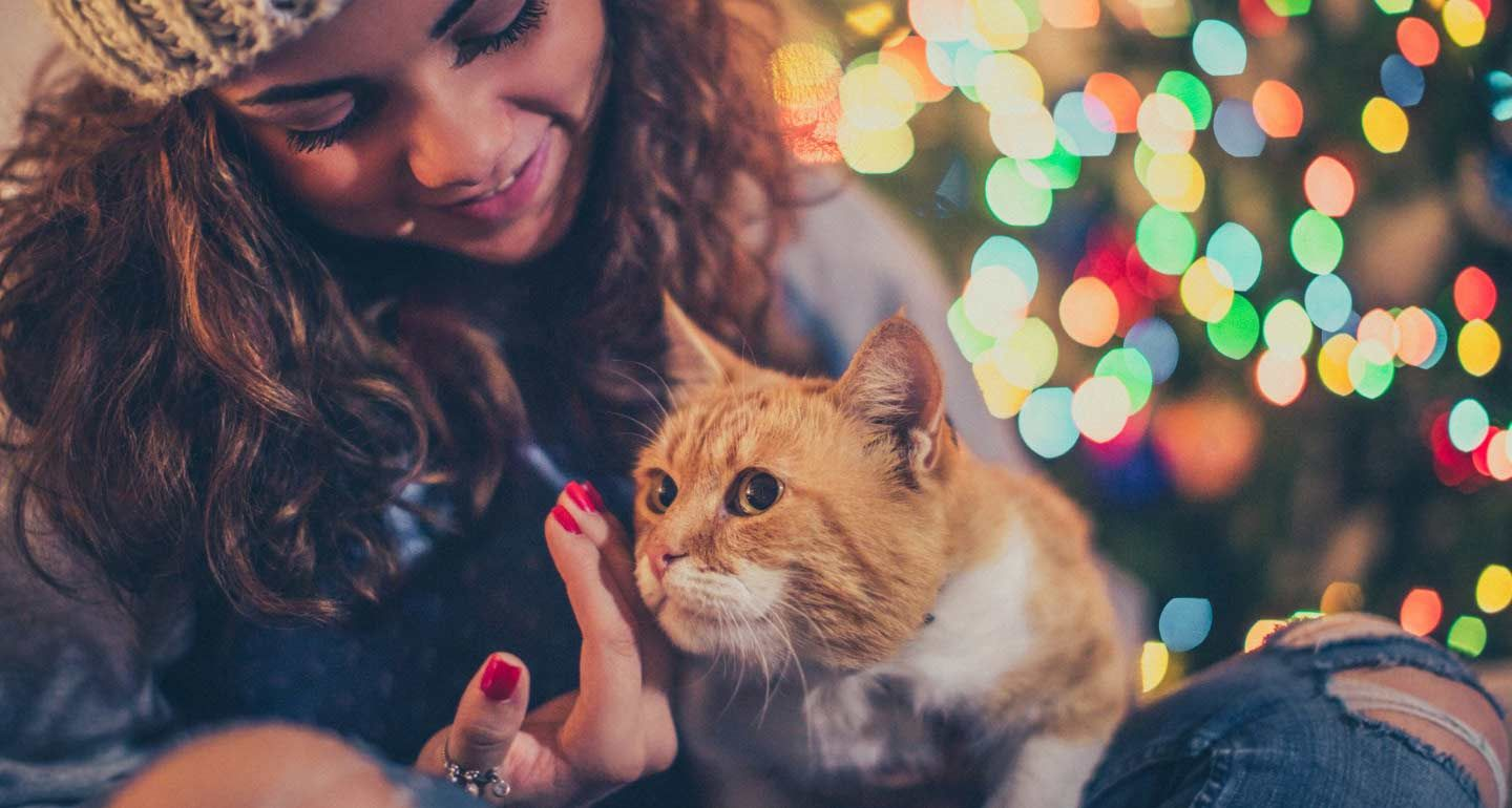 Holiday Safety Tips How To CatProof Your Christmas Tree