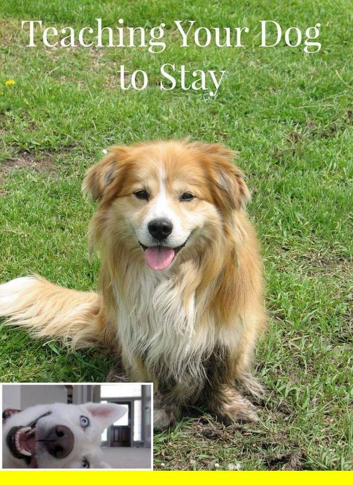 Dog Obedience Training Bemidji Mn Dogtraining And Dog Behavior
