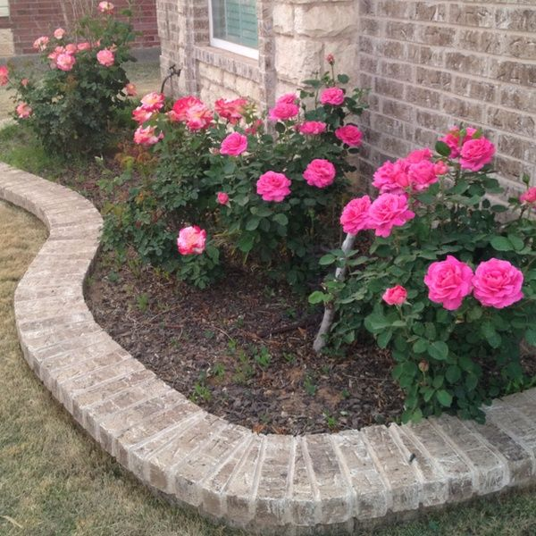 Lauren wants pink rose bushes in the front yard for the for How to plant bushes in front of house