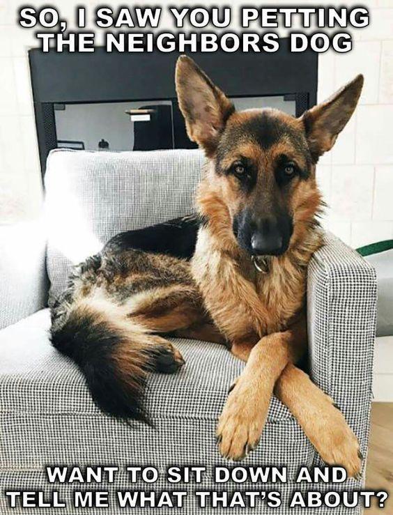 This Is Awkward Lol Gsd Love Shepherd Puppies German