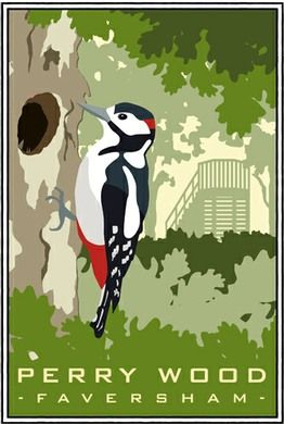 Great Spotted Woodpecker in Perry Wood, Selling near Faversham. A4 print £12 from http://www.whiteonesugar.co.uk/country-collection/perry-wood-woodpecker.htm