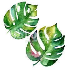 Resultado de imagen de botanical illustration watercolor