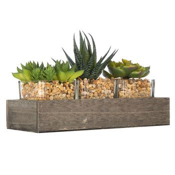 Hobby Lobby Decorative Boxes From Hobby Lobbyi Really Love Succulents Green House