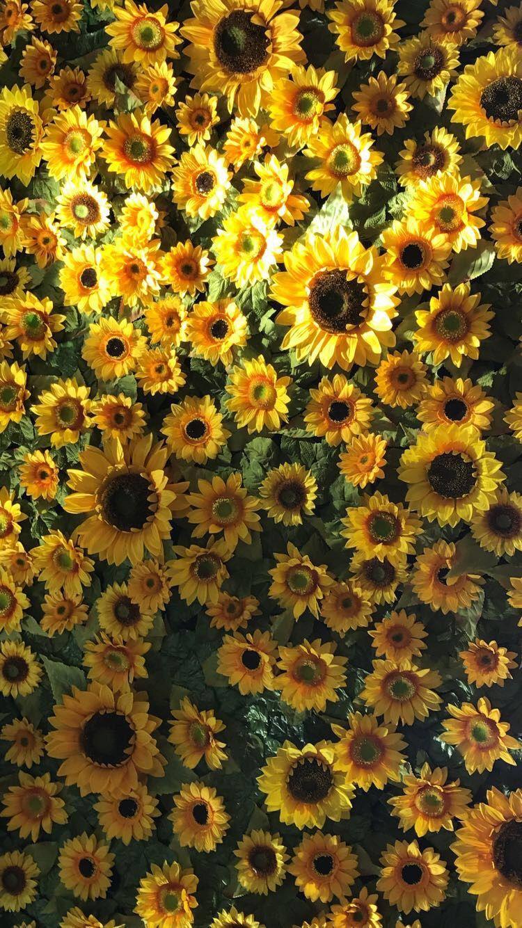 Flower Wallpaper Flowerwallpaper Papeis De Parede Para