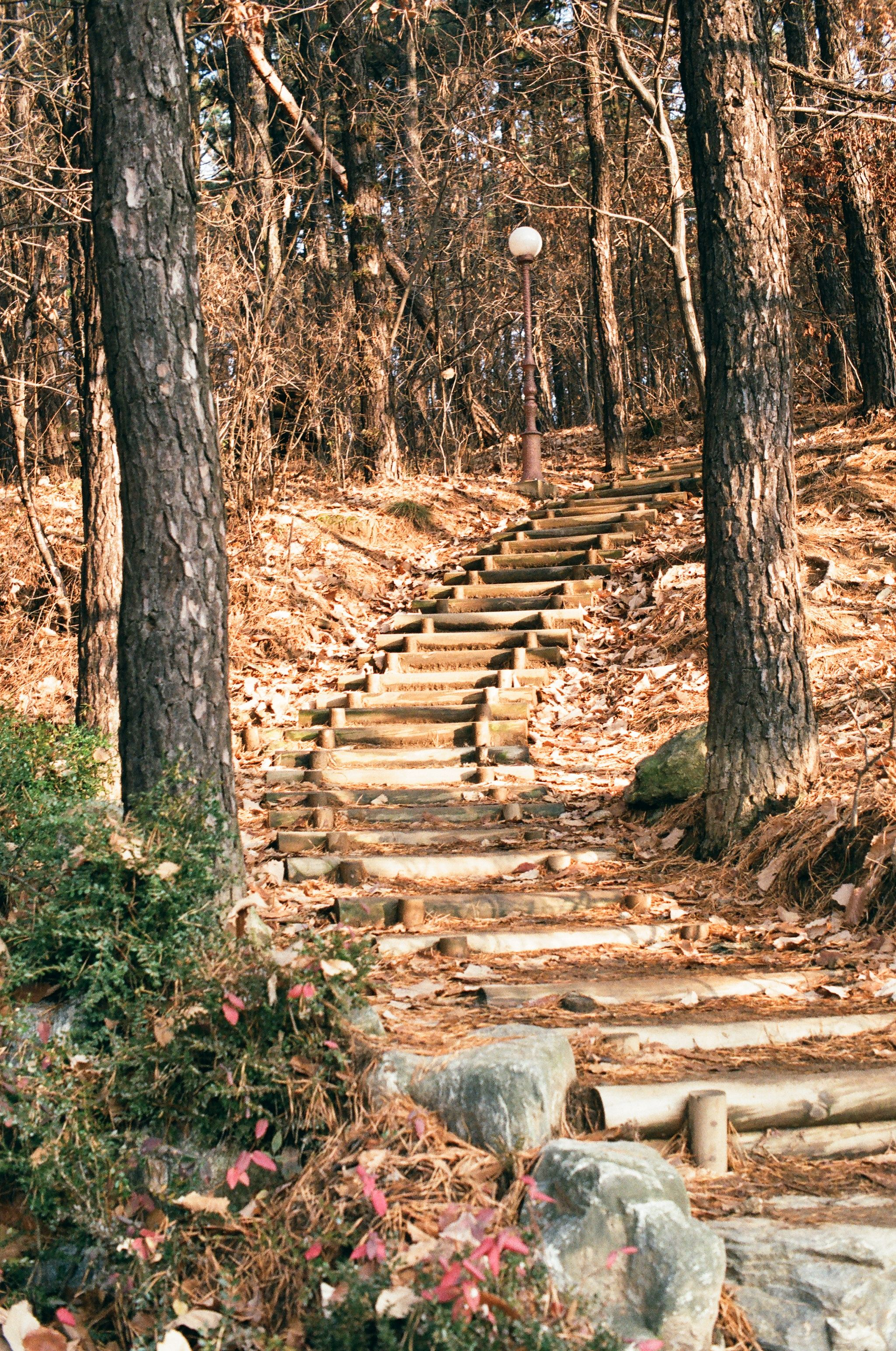Walking path in Joongang Park, Korea (Pictured by Pentax me-super)