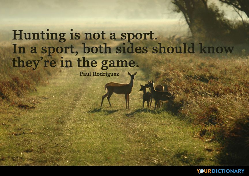 Hunting is not a sport. In a sport, both sides should know