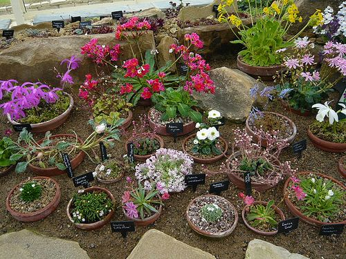 Small easy rock gardens rock gardens in miniature for Simple rock garden designs