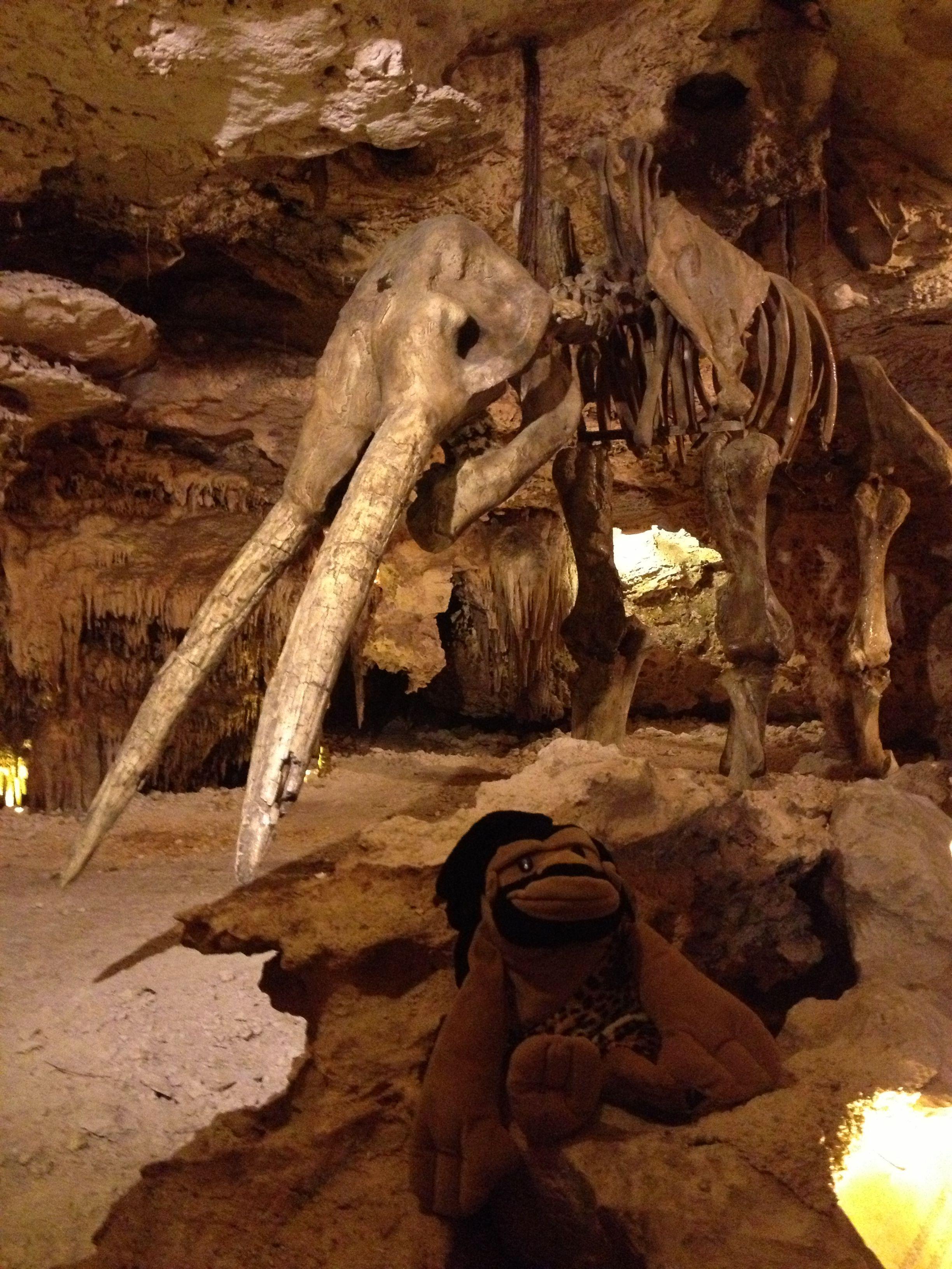 「Gomphotherium Mexico」の画像検索結果