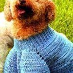 Photo of Cómo hacer un abrigo para mascotas – Patrones gratis