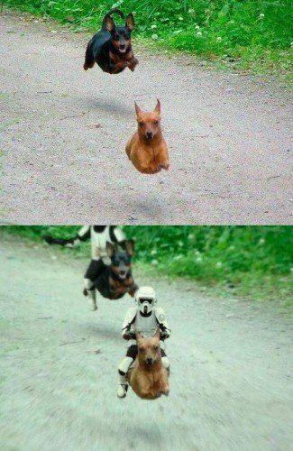 Star Wars Locopengu Why So Serious Humorvolle Bilder Star Wars Meme Lustige Haustiere