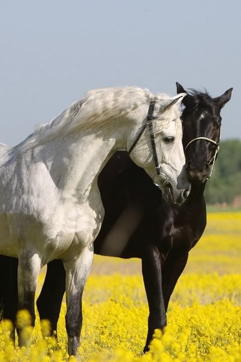 Black & White horse love: horses take such good care of ...