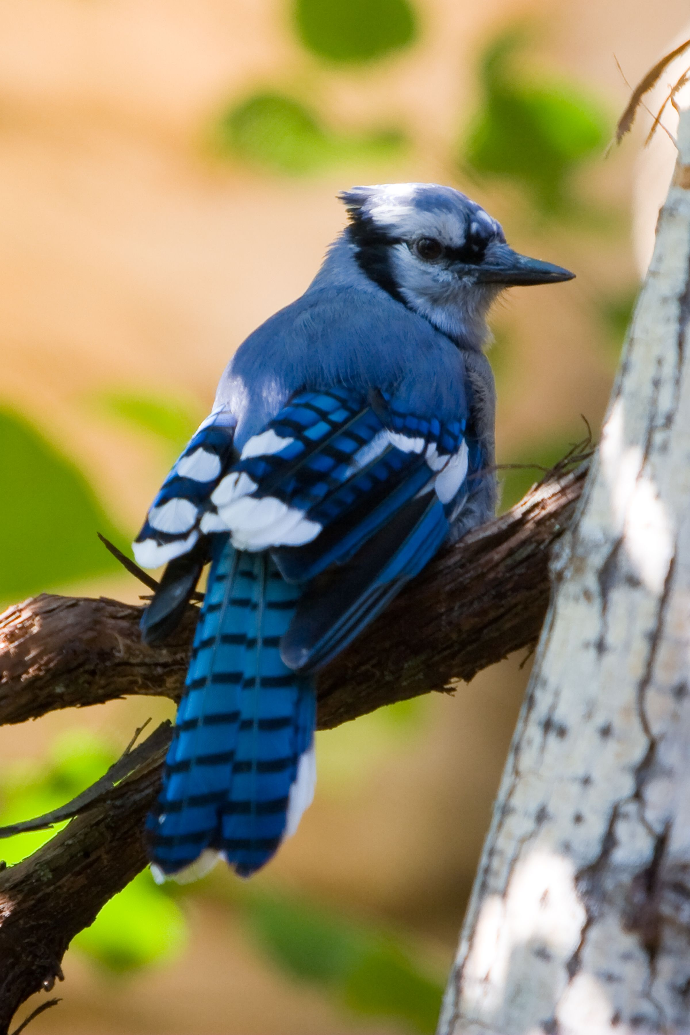 Anyone Can Be A Bird Watcher On Our Minnesota Trail Minnesota Birds Cute Animal Photos Pretty Birds