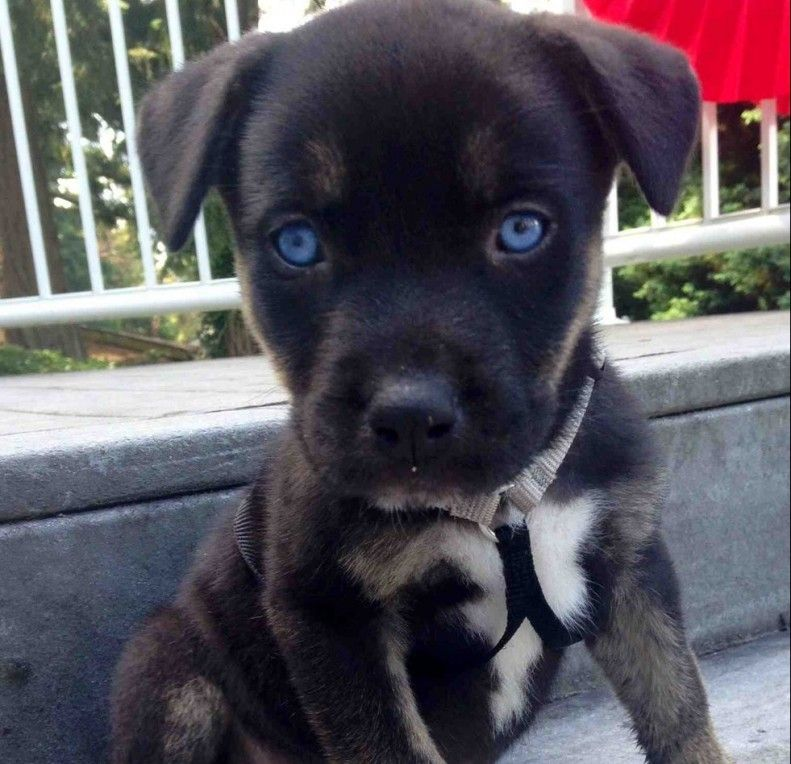14 Insanely Adorable Dog Mixes Baby Animals Cute Animals Animals