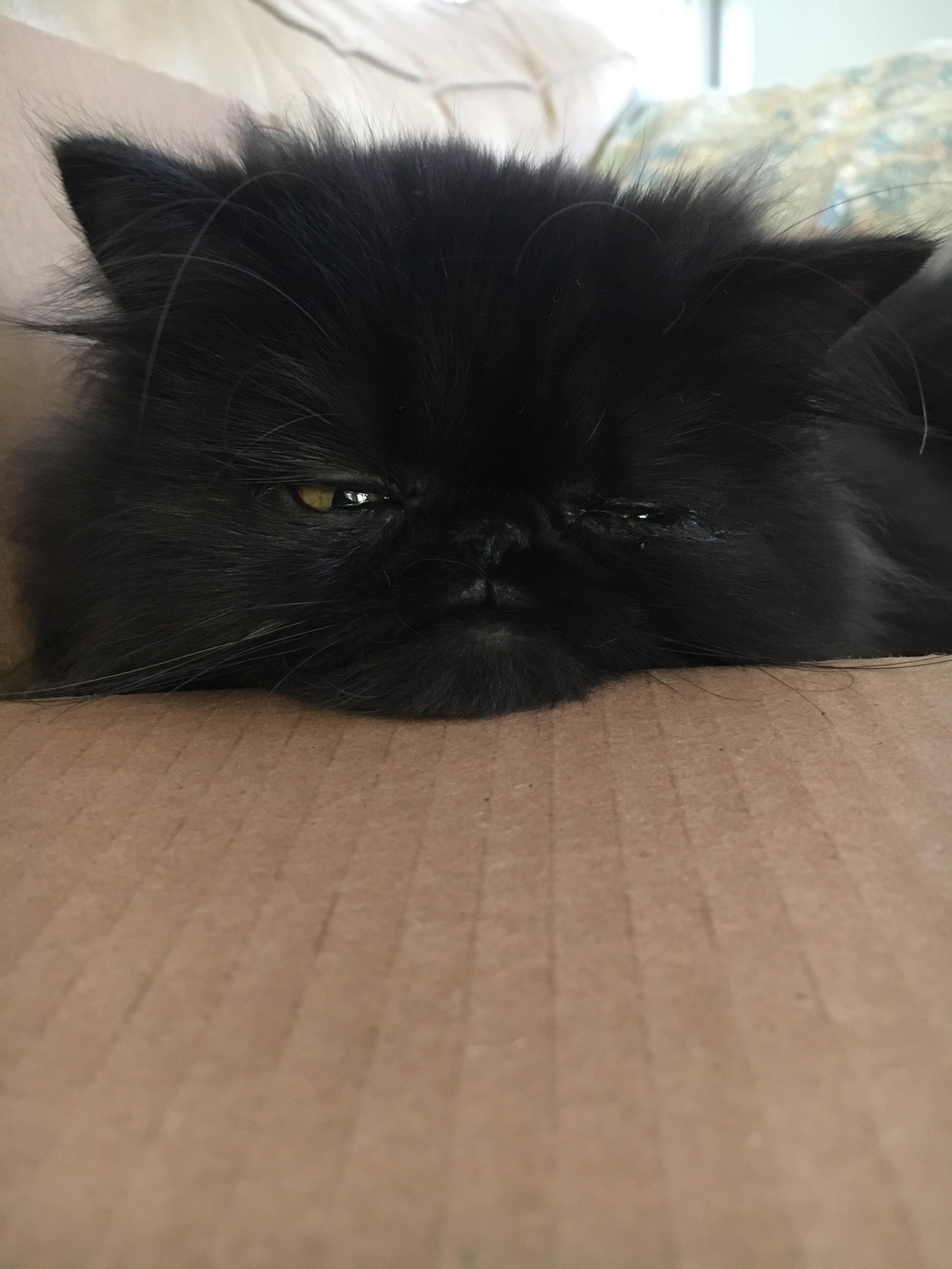 Some cats get happy in boxes. Mine gets sad. http://ift.tt/2yfecyE
