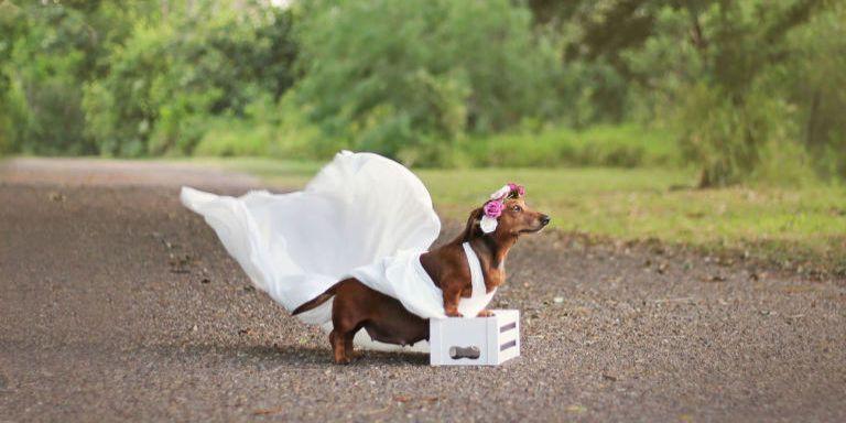 This Adorable Newborn Puppy Photo Shoot Will Make Your Heart Melt Newborn Puppies Pregnant Dog Dog Photoshoot