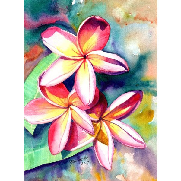 Plumeria Watercolors Hawaiian Flowers Tropical Flowers Frangipani 119 Liked On Polyvore Featuring Flower Painting Flower Art Tropical Art