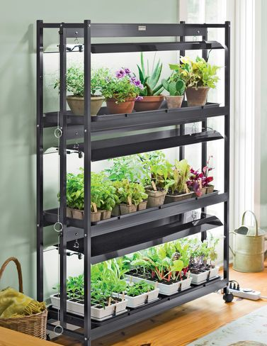 Grow an indoor vegetable garden and enjoy your own fresh for Growing vegetables indoors