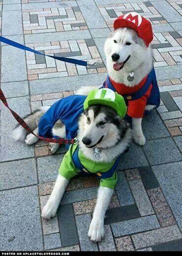 Aww Mario And Luigi Cute Dog Costumes Pet Halloween Costumes Pet Costumes