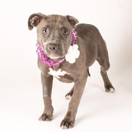 Madeline is available for adoption at our Mission campus
