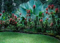 Hawaii Landscape Design | tropical landscaping – hawaiian tropical gardens containing exotic ...