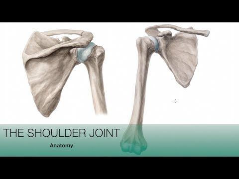 Shoulder Joint - Anatomy tutorial | Kenhub | Week 4 AP1 | Pinterest