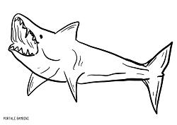 Disegni Di Squali Da Stampare E Colorare Gratis Portale Bambini Sea Shark Fish Coloring Coloringpages Coloringinspiration Squalo Colori Disegni