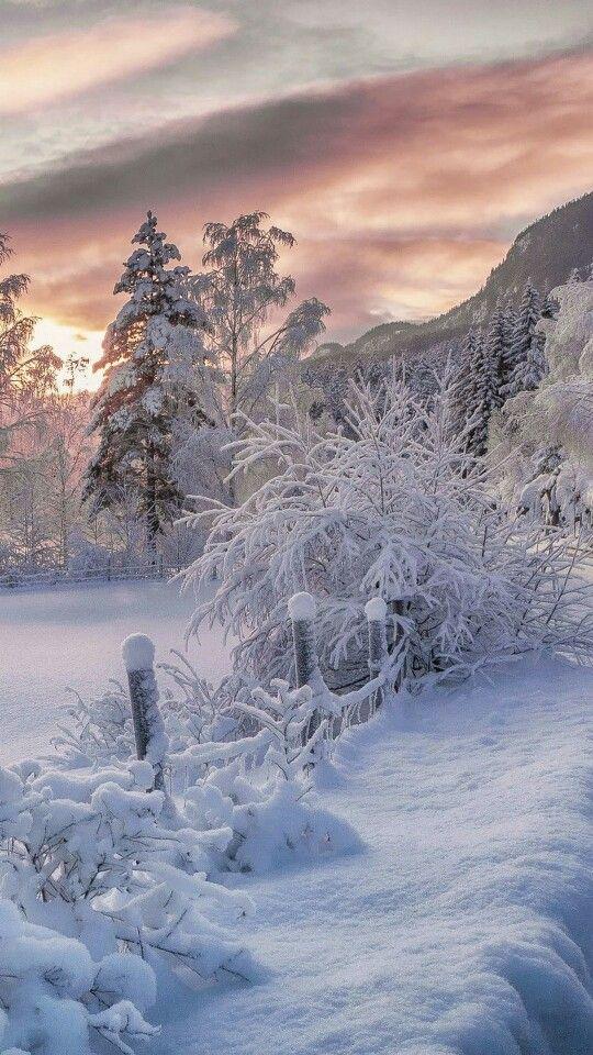 Wintery beautiful snowy nature